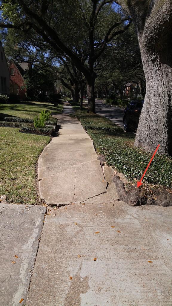 Tree Roots Crc Concrete Raising Corporation